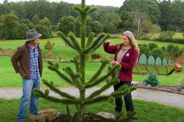 Tino and Tonia Gardening Australia 2018