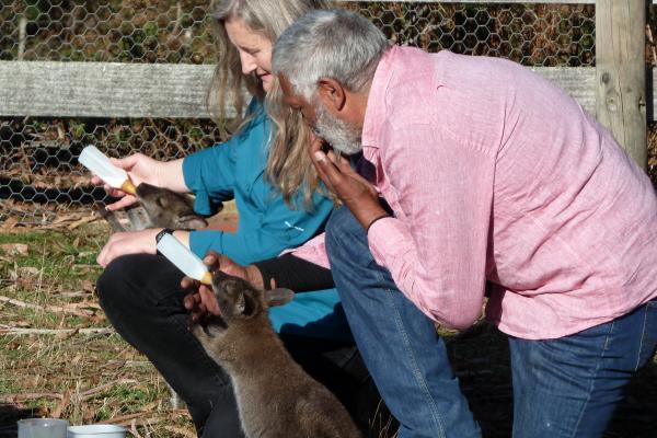Tonia Cochran and Ernie Dingo feeding Wallaby Orphans