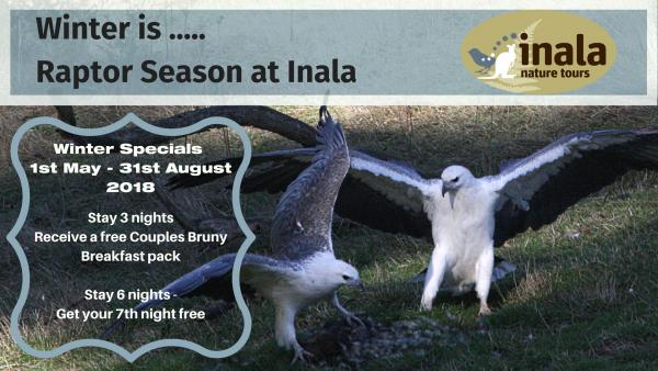 Winter Special 2018 - Inala Nature Tours - Photo Cat Davidson