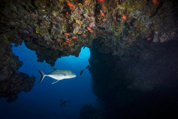Reef - Palau - Scott Davis