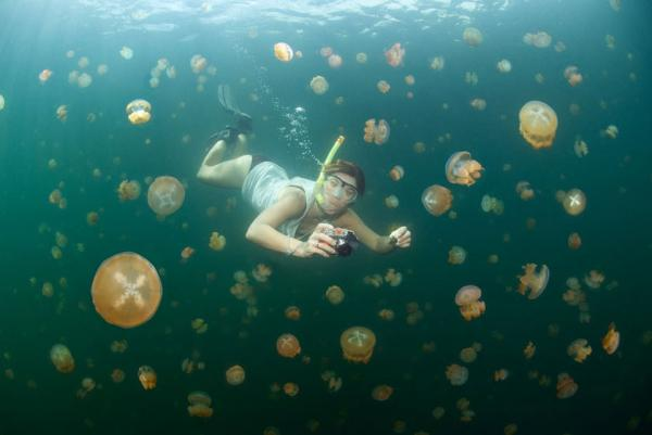Underwater Jellyfish Lake - Palau