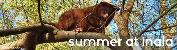 Summer Newsletter - Inala Nature Tours