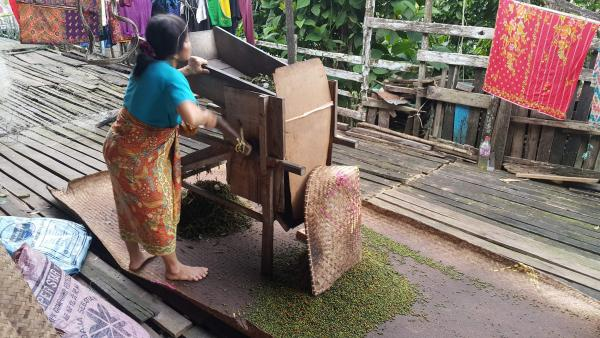 Processing Pepper - M. Hendry - Inala Nature Tours