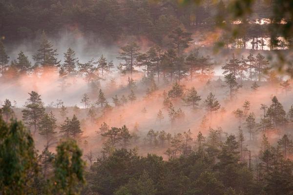 Peat Bog in Korvemaa - Ingmar Muusikus - Inala Nature Tours