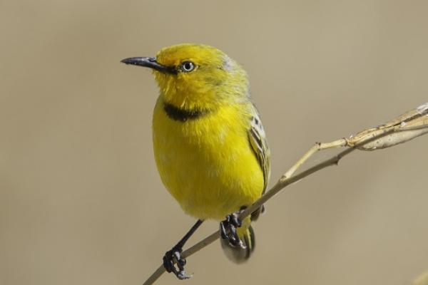 Yellow Chat by Andrew Browne