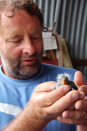 Mark with a precious Orange-bellied Parrot chick. Mark has been integral to the conservation of this incredibly rare species.